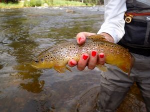 Taylor River Fishing Report August 2017