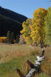 Crested Butte Fall Foliage picture