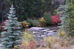Taylor River Fall Foliage picture