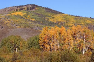 Mountain Fall Foliage picture