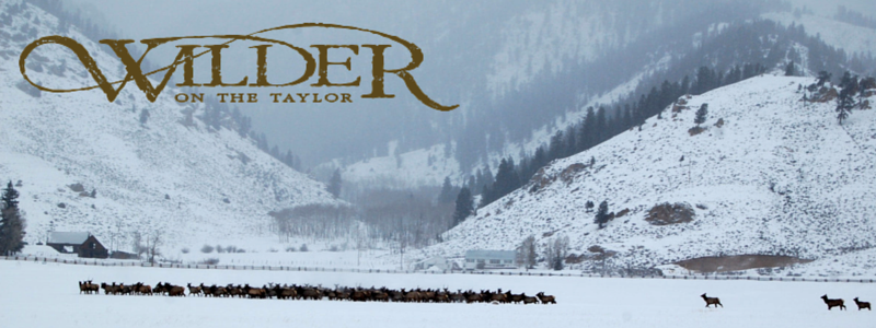 wintertime at wilder on the taylor