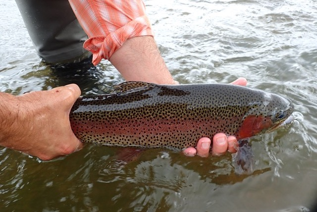 Fly Fishing Report
