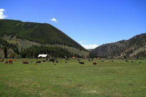 Cattlemans Days