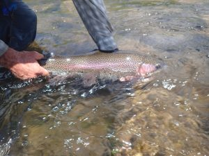 Taylor River Fly Fishing