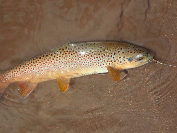 Fly Fishing Report May 2019