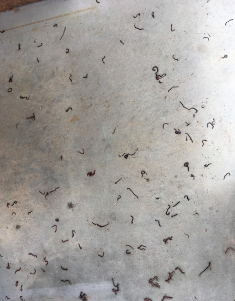 Worms on the Pumphouse Floor