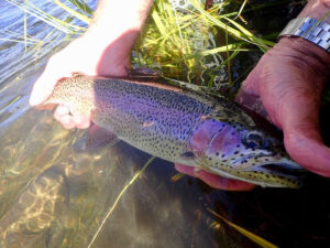 July Taylor River Fishing Report