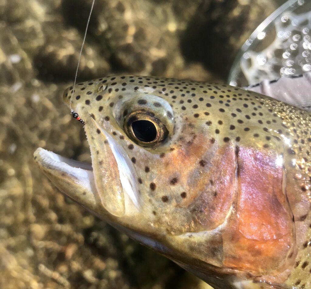 Fall Taylor River Fishing Report