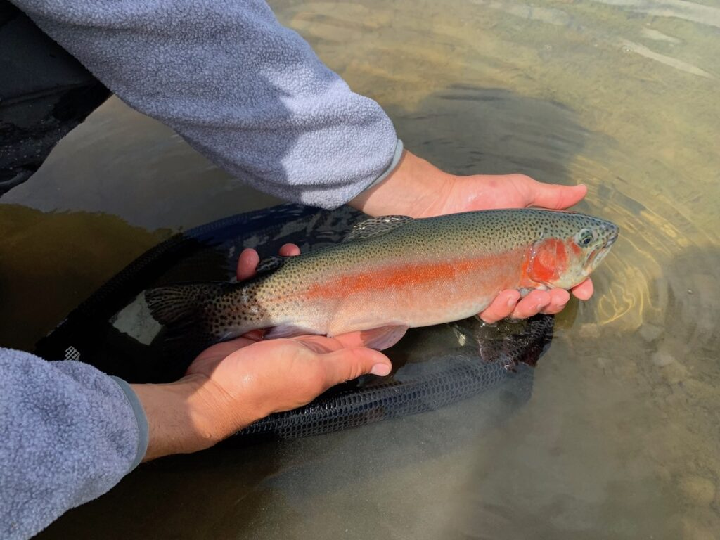 Taylor River Fishing Report August 2021